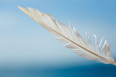 Feather in the sky. Photo royalty free stock photography