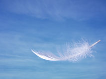 Feather and sky - lightness, softness concept. Stock Photos
