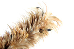 Feather soft duster isolated. Stock Photo