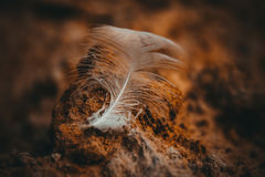 A feather. Some bird left a feather on the sand Stock Photography