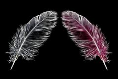 Feather/spring Stock Photography