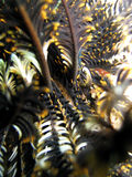 Feather Star Abstract Royalty Free Stock Photo