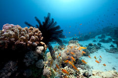 Free Feather Star And Ocean Royalty Free Stock Photos - 12542128