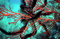 Feather star on orange fan coral Royalty Free Stock Images