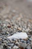 Feather on stone beach Royalty Free Stock Photos