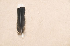 Feather story Stock Images