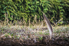 Feather. Stuck in my garden Stock Photo