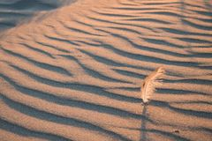 Feather stuck in sand at sunset royalty free stock image