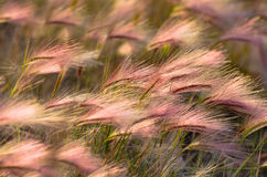 Feather in the sunshine Royalty Free Stock Images