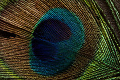 Feather texture Stock Images