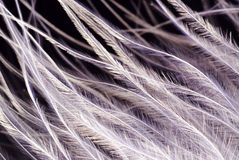 Feather texture closeup. White feather macro view, abstract winter pattern Stock Photography