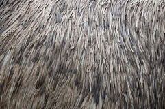 Feather Texture, ostrich Royalty Free Stock Photo