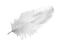 Feather upper side Royalty Free Stock Image