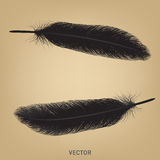Feather vector Royalty Free Stock Photos