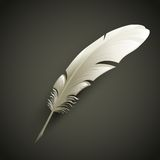 Feather. Vector illustration Royalty Free Stock Images