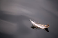 Feather on the water Stock Photos