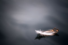 Feather on the water angels background   beautiful  bird black blue close Royalty Free Stock Photos