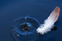 Feather On Water Royalty Free Stock Photography