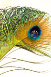 Feather and Water Drop. A single Peacock feather with a waterdrop at the eye Royalty Free Stock Photo