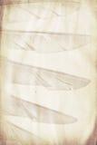 Feather watermark Stock Photo