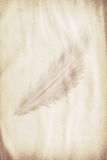 Feather watermark Royalty Free Stock Photos