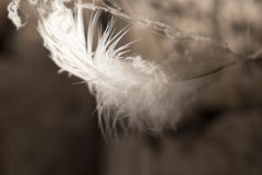 Feather in the web Royalty Free Stock Photography