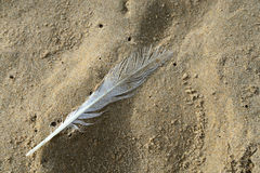 Feather on wet beach sand Royalty Free Stock Photo