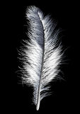 Feather white Stock Photos