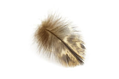 Feather Stock Photography