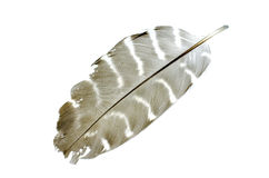 Feather with white isolate background. White and Brown feather Stock Photography