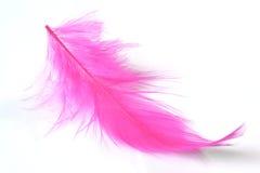 Feather on white Royalty Free Stock Photo