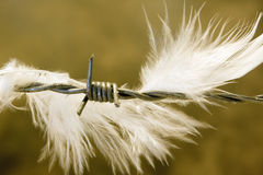 Feather on wire Royalty Free Stock Image
