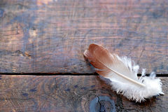 Feather On Wood Royalty Free Stock Image
