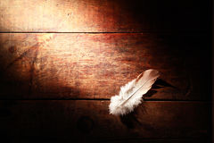 Feather On Wood Stock Photography