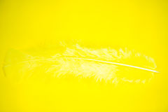 Feather on yellow background Royalty Free Stock Photos