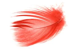 feather2红色 免版税库存照片