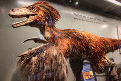 Feathered Dinosaur. (Beipiaosaurus) in the dinosaur exhibition at the Museum of Natural History in Vienna Stock Images