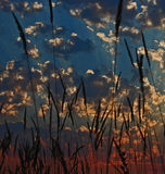 Feathered Sunset. Tall grasses frame the clouds as the sun sets in brilliant color Stock Photos