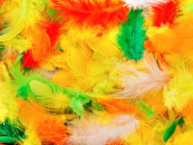 Feathers. Photo of diffirent colors feathers background Stock Images