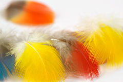 Feathers. On white Stock Image