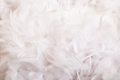Feathers. White feathers all around the place royalty free stock photography
