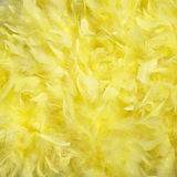 Feathers. Fluffy background. Yellow feathers set Stock Photos