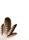 Feathers. On the white background Royalty Free Stock Photography