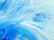 Feathers. Close-up of blue and white feathers royalty free stock photos