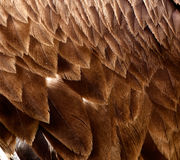 Feathers. A bird feathers close up Stock Photography