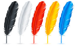 Feathers. Royalty Free Stock Photo