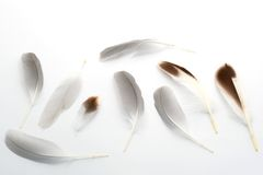 Feathers-2 Stock Photography