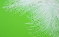 Feathers. Beautiful whites feathers on green background Royalty Free Stock Image