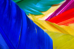 Feathers. Abstract image of colourful feathers Royalty Free Stock Images