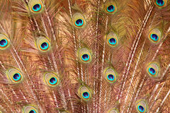 Feathers. Stock Photography